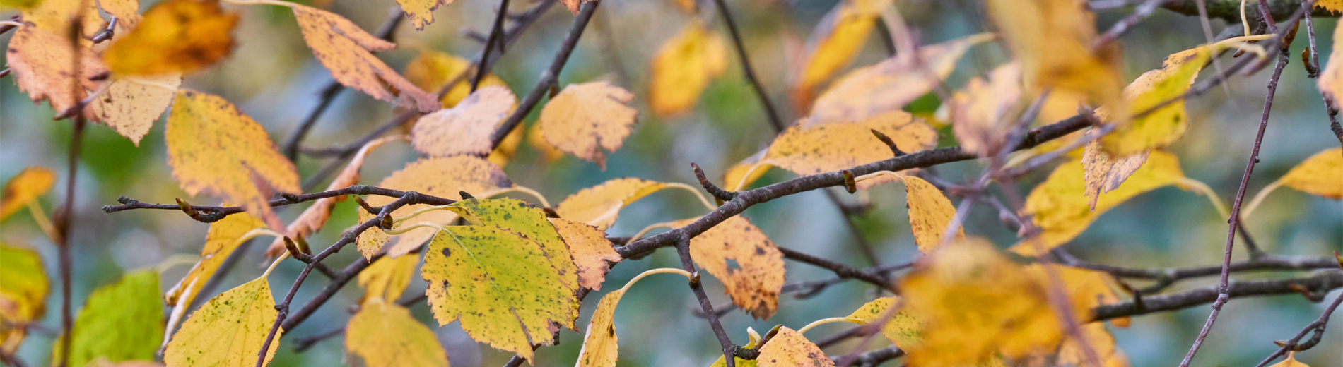 Autumny Pirita