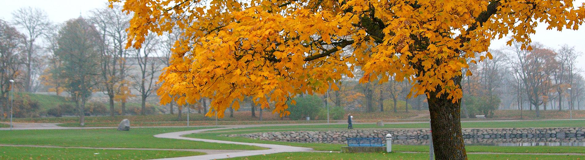 Foggy Saaremaa