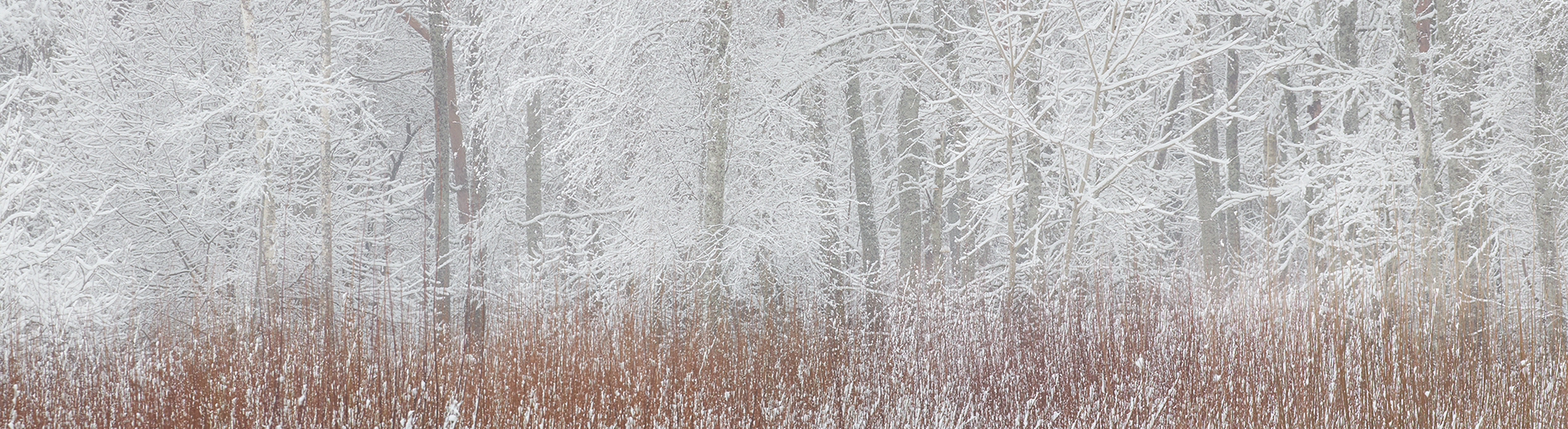 Lumine Järve mets