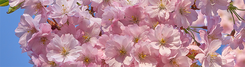 Kirsiõite aeg