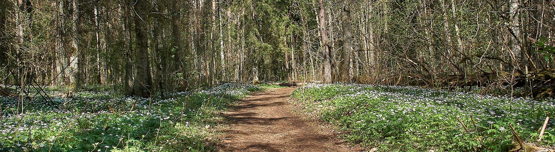 Kevad saabus Astangu metsadesse