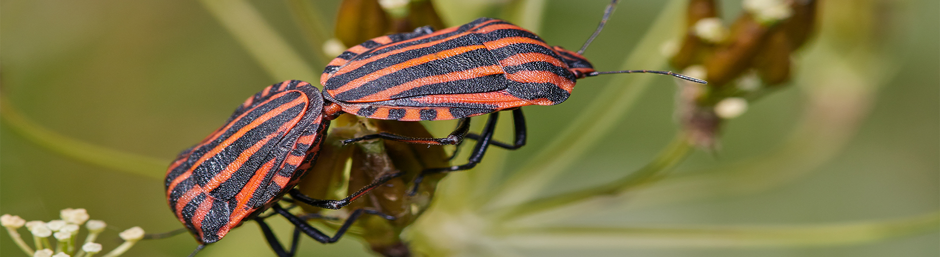 Exciting world of insects