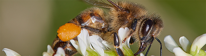 Putukad Türisalus