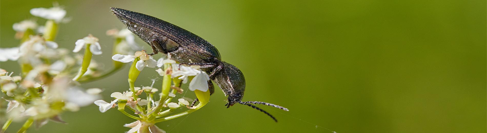 Putukad Pakri poolsaarel