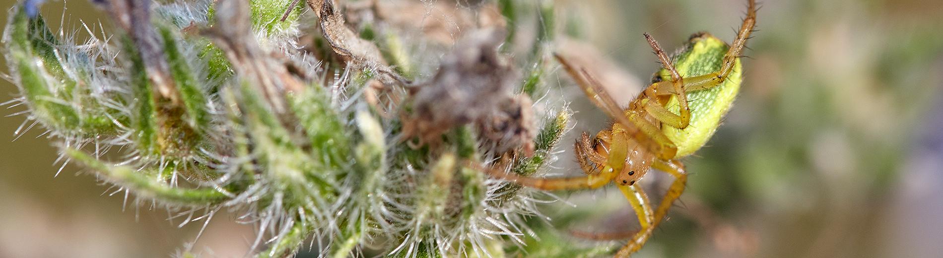 Putukad päikesepaistelisel päeval